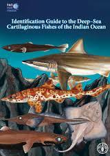 Couverture de l'ouvrage Identification guide to the deep sea cartilagenous fishes of the India